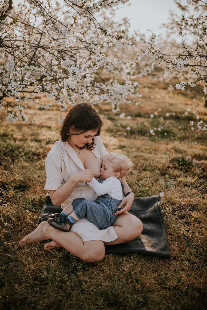 wiosenna sesja rodzinna kwitnący sad karmienie piersią